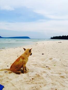 Koh Rong Dog, Bungalow