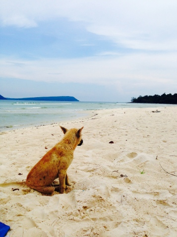 Koh Rong Dog, Bungalow
